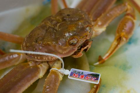 今シーズンも浜坂漁港から「松葉蟹」が届いています!