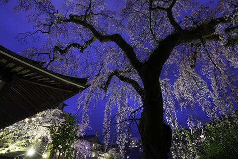 [ イベント情報 ] 夜桜茶会
