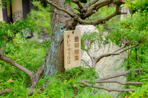 樹木の名札