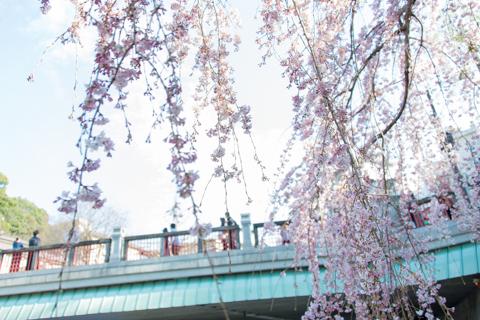 有馬温泉の桜